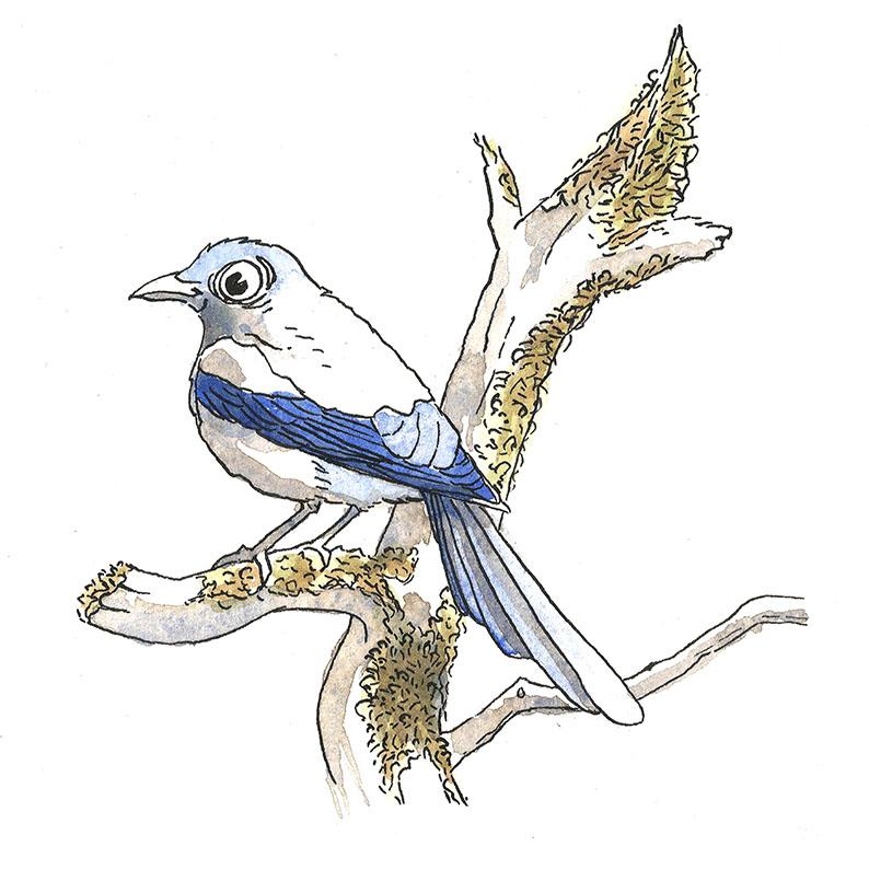 illustration pie aquarelle